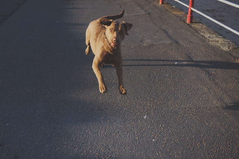 photo of a jumping dog